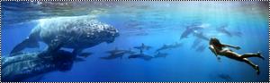 {Fiche/Espèce} : The Barreleye Fish 969284jjyuj