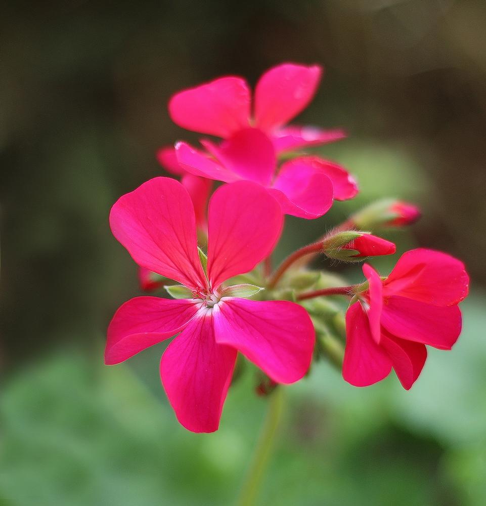 Petite fleur de l'été. 970351F4042