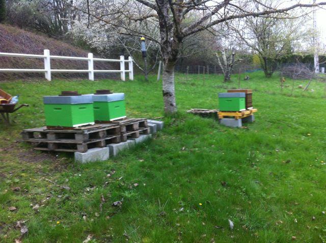 Essaim artificiel avec plusieurs ruches 970694IMG1620