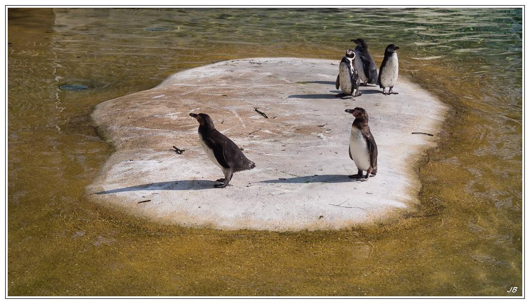 Zoo de Beauval : les oiseaux 973458LR53P3130308