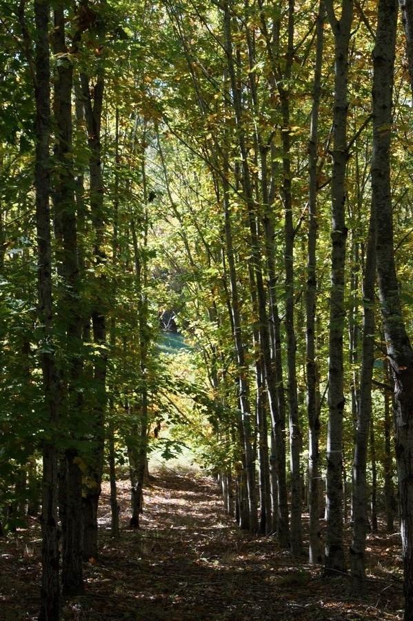 [fil ouvert] la forêt dans tous ses états - Page 15 981977DSC07754