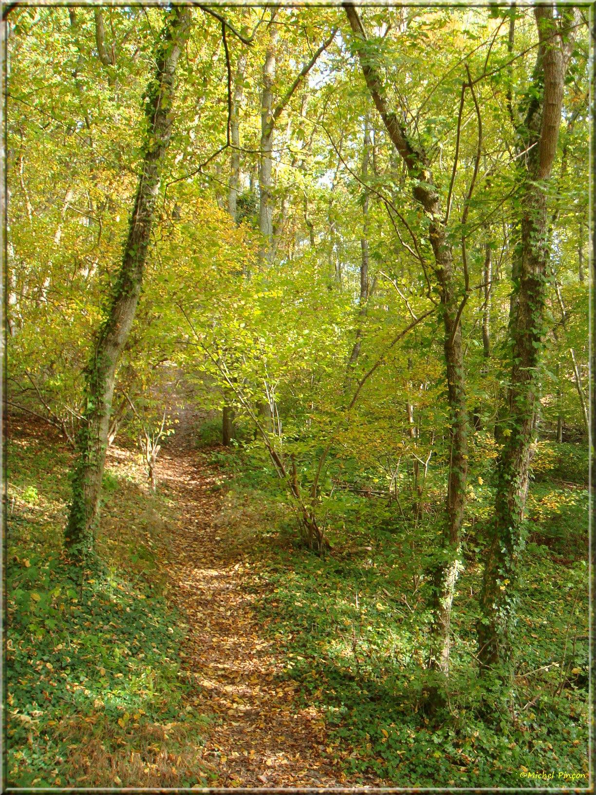 [fil ouvert] la forêt dans tous ses états - Page 15 985466DSC014036