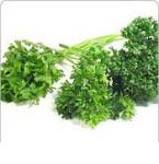 Partie Guérisseur : Les plantes de la Forêt 986507persil