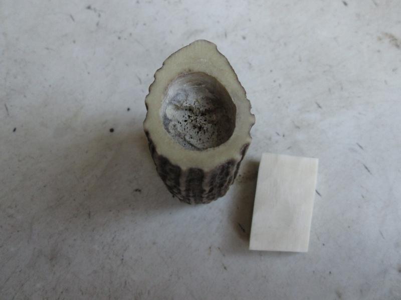 Création blaireau bois de cerf 988210IMG5299