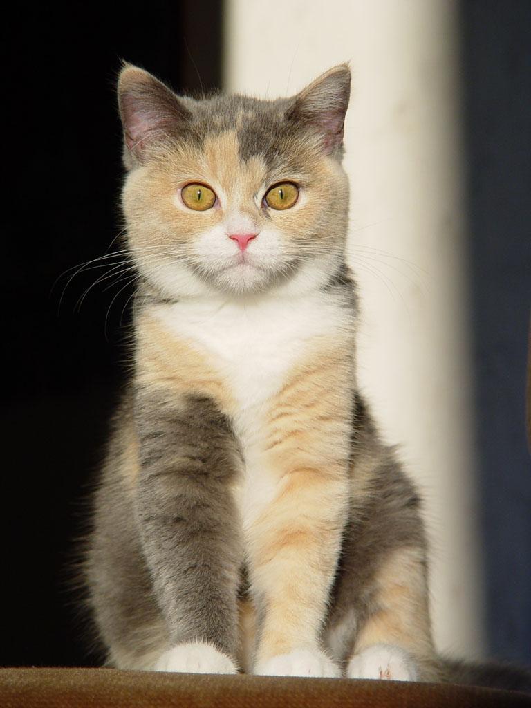 Les chats - Page 2 989645TheModelbyfox