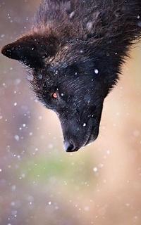 Björnulf