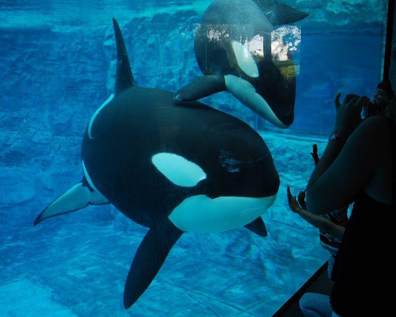 [Photos] Orques aux vitres 994880takaraandtrua