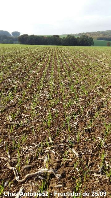 Les céréales d'hiver 2016 en cours de levée 995966A522
