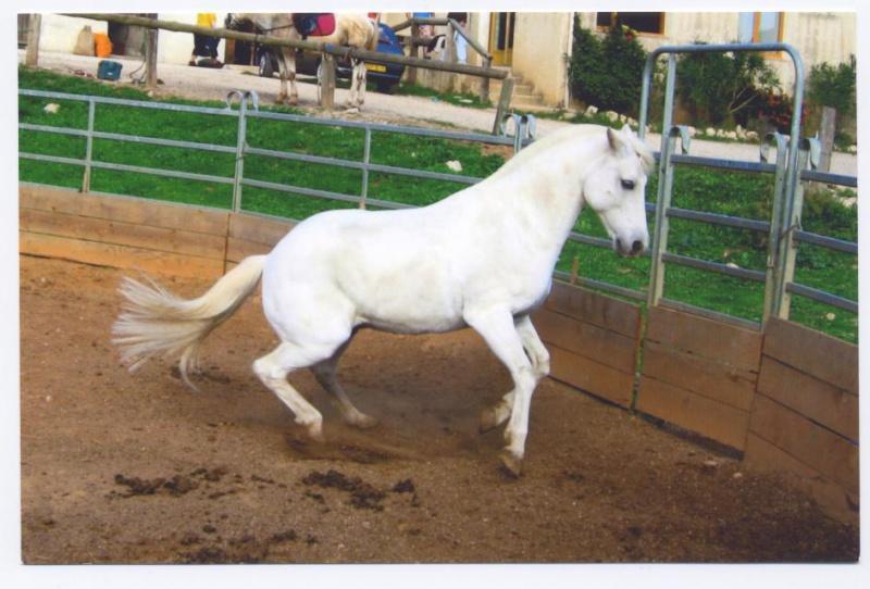 Une tumeur à la ganache a emporté mon cheval Banco. Qui a déjà vu ça ? 998440bancophotos001