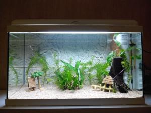 Aquarium de 60L pour betta Mini_112698IMG20140121200034