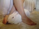 Association White Rabbit - Réhabilitation des lapins de laboratoire - Page 3 Mini_12059620150830Arwen7pieds