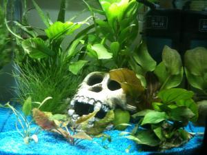 Aide  au placement des plantes pour nouvel aquarium Mini_136194IMG1860