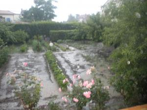 Le jardin, refuge de Marsouine Mini_162935DSCN6251