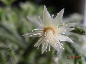 Aujourdui c'est rempotage de mes cactus! :) Mini_190146DSCN1623