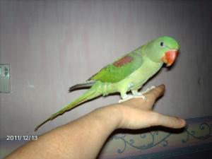 Mon bébé Grand alexandre Ruby !! - Page 3 Mini_199038IMAG0589