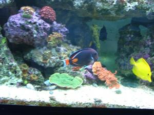 1500 litres aquarium récifale - xavier34 Mini_210367achillefringue012
