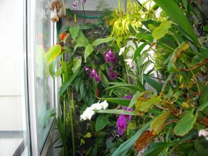 culture des bégonias sur mur végétal Mini_212267IMGP3446
