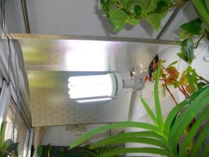culture des bégonias sur mur végétal Mini_249676IMGP2185