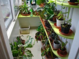 culture des bégonias sur mur végétal Mini_253105IMGP7555