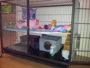 choisir une cage Mini_29591420120605205320