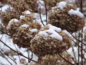 Thème du mois de Janvier 2016  : La nature en hiver et en couleurs de votre choix Mini_297393DSC01250