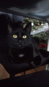 Néji, chaton noir, né le 30/05/17 Mini_298896P20171227171718