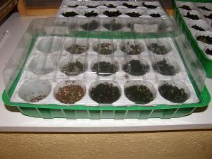Besoins d'aide pour des mouches de terreau et moisissures Mini_300481P8220029