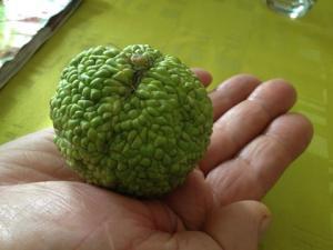 Fruit ou graine insolite Mini_342163Fruitinsolite