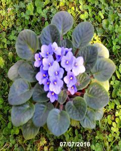 2ème vie du Gros Bleu Mini_362058GrosBleuopr