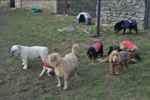 Refuge de l'AVA: Aide aux Vieux Animaux Mini_380971DSC0307