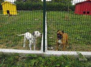 Refuge de l'AVA: Aide aux Vieux Animaux Mini_438023IMGP1141