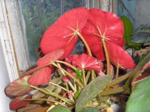 Thème du mois de Janvier 2012 : Rouge c'est rouge. Le mot rouge vous fait penser à quoi ? Mini_504001P9081867