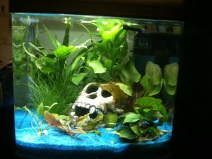 Aide  au placement des plantes pour nouvel aquarium Mini_511403IMG1857