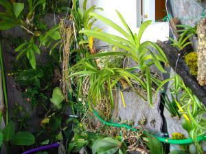 culture des bégonias sur mur végétal Mini_514138IMGP1558