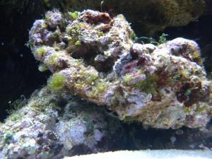 Lancement RED SEA 130D Mini_540292DSCN2383