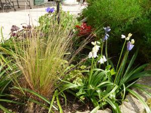 quelques plantouilles au jardin, en ce moment ! Mini_568268597