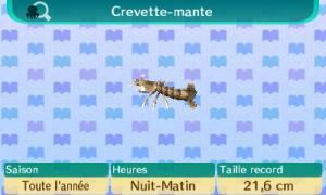[GUIDE] Les créatures marines. Mini_579846Crevettemante