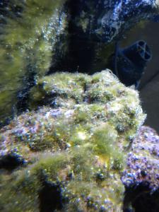 Lancement RED SEA 130D Mini_606776DSCN2377