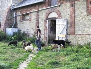 Refuge de l'AVA: Aide aux Vieux Animaux Mini_6143902527242105168107540119562152725636402090997n