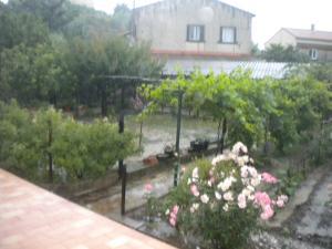 Le jardin, refuge de Marsouine Mini_665912DSCN6252
