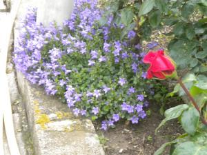 Le jardin, refuge de Marsouine Mini_685416DSCN6101