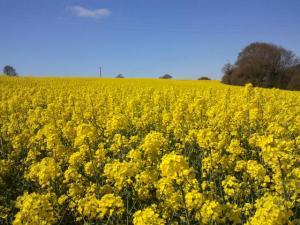Thème du mois de Mai 2013 : Le printemps est enfin là ! Explosion de la nature Mini_6950202013015