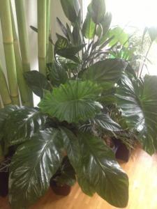 Mes plantes exotiques et tropicales Mini_726623photo2