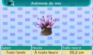 [GUIDE] Les créatures marines. Mini_794193Anmonedemer