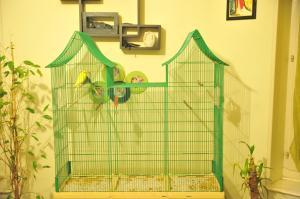 Cage maison et vegetaux Mini_812632DSC2317
