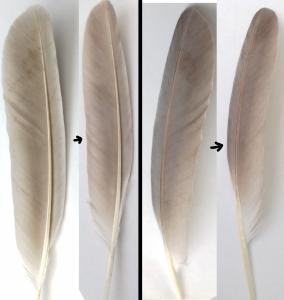 Nettoyer les plumes à l'acétone ? Mini_813136Sanstitre