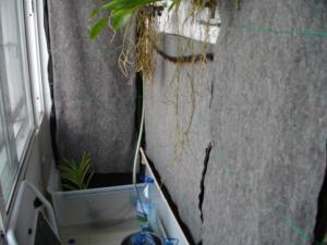 culture des bégonias sur mur végétal Mini_816146IMGP1545