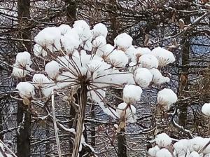 Thème du mois de Janvier 2016  : La nature en hiver et en couleurs de votre choix Mini_830587IMG030120161406401451828926838