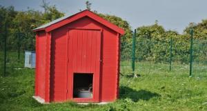 Refuge de l'AVA: Aide aux Vieux Animaux Mini_87051029430924106076619211153122879328668041131375993n