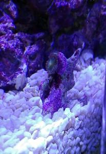 Identification coraux Mini_874021IMG20170303192146